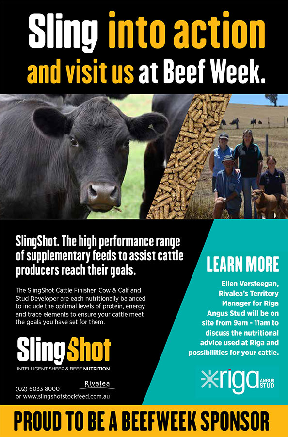 RIV17312-SlingShot-cattle-beef-week_RigaAngus-press_V2